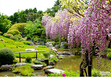 Kyoto in Nature